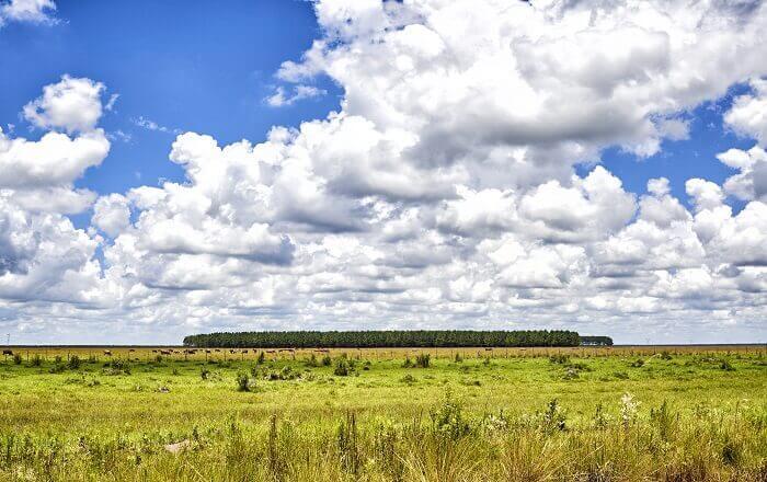 Uruguay pampas